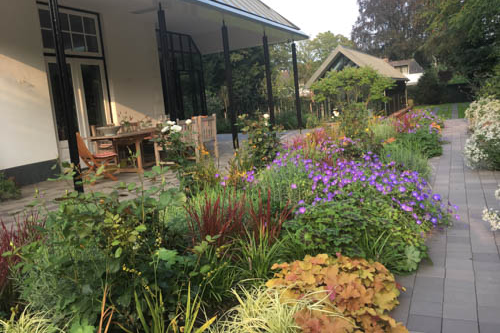 tuin wichmanlaan in volle bloei